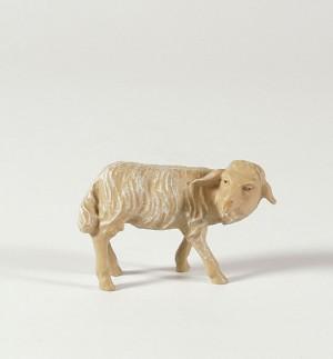 Schaf, umschauend