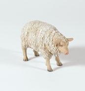 Schaf, schauend