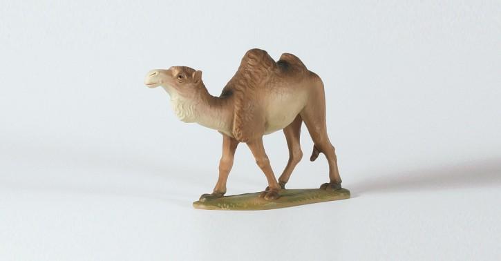Kamel, stehend