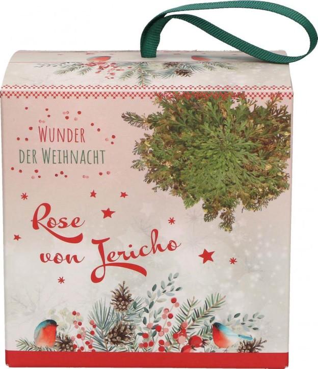 Rose von Jericho - Wunder der Weihnacht