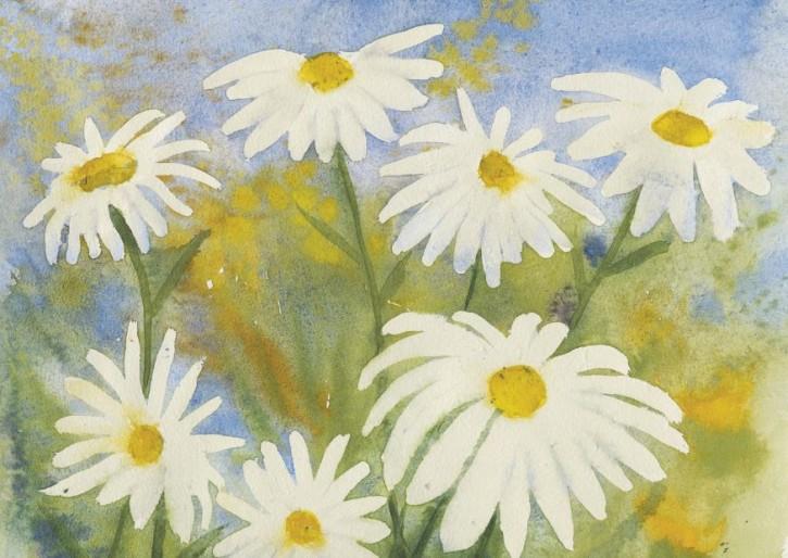 Weiße Margeriten