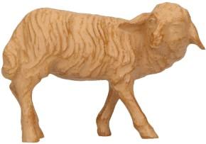 Krippenfigur Schaf, umschauend - Größe: 12 cm